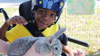 Featured image: BrightStart Sanford Petting Zoo