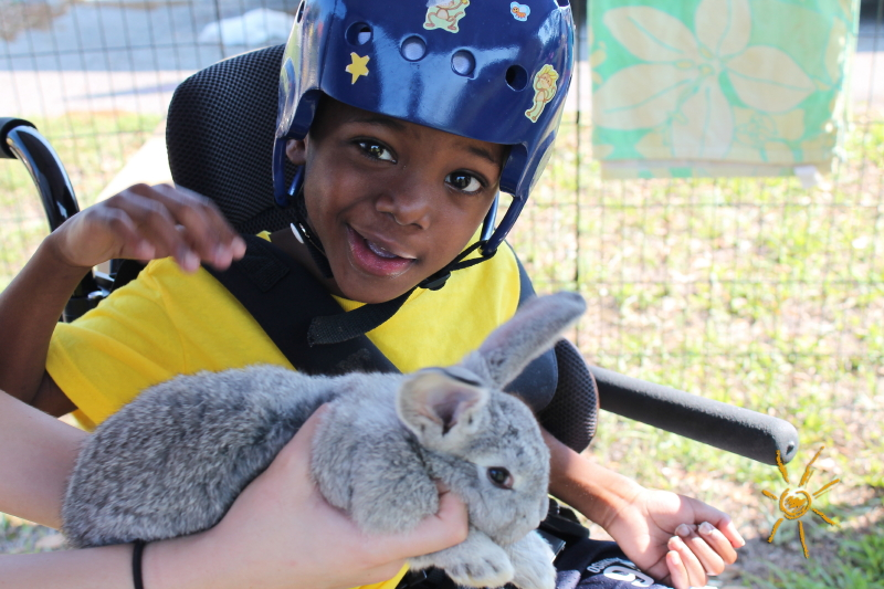 Featured image: BrightStart Sanford Petting Zoo